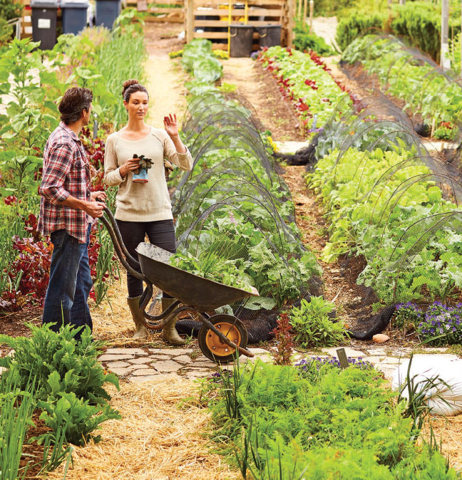 Community Gardens Take Root