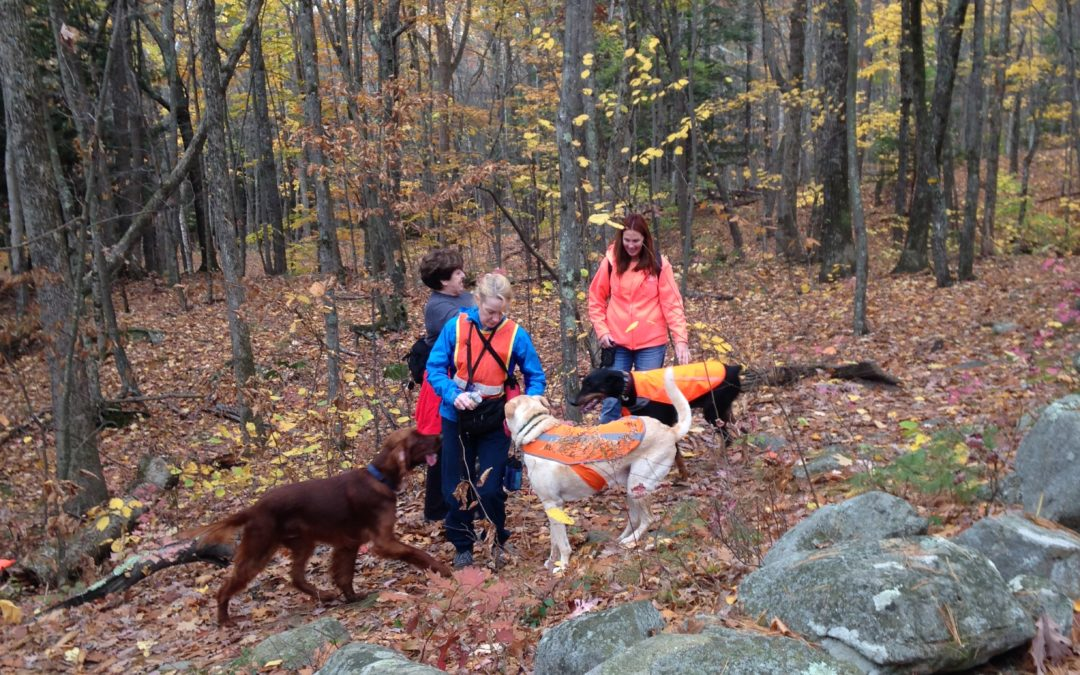 Meetup Spotlight: Hit the Trails With Your Pups and New Friends