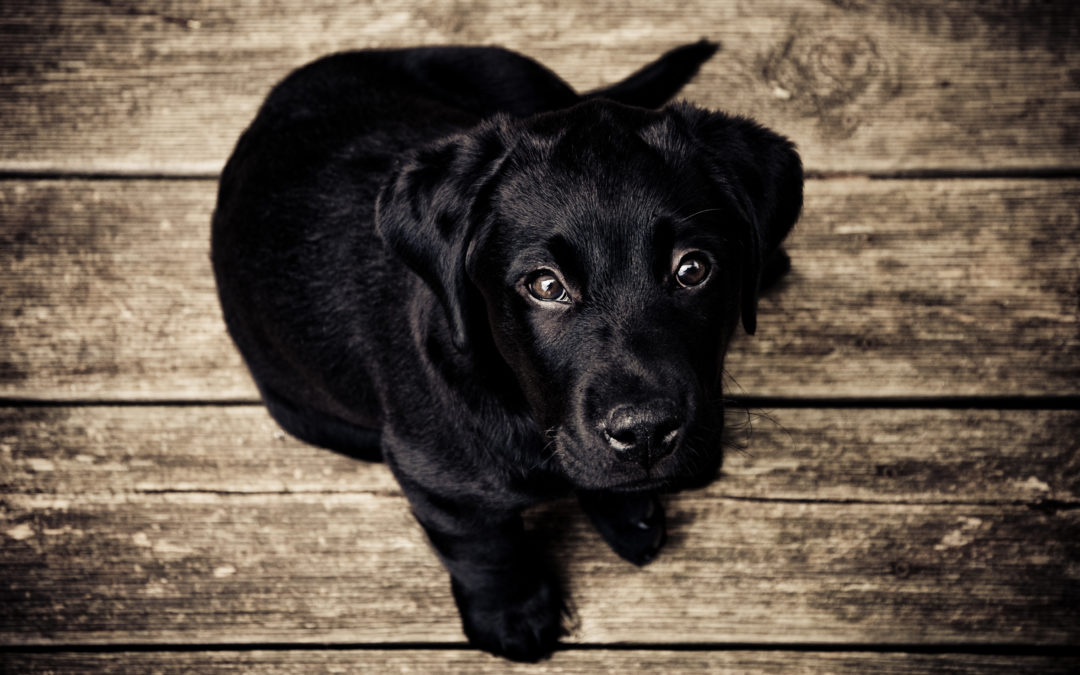 Time is Running Out: Dog License Renewals