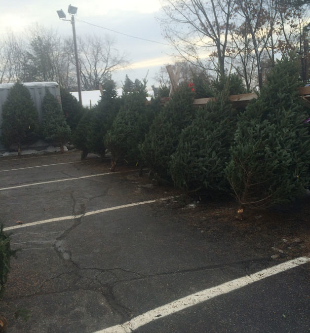 2014 Concord Area Christmas Tree Guide
