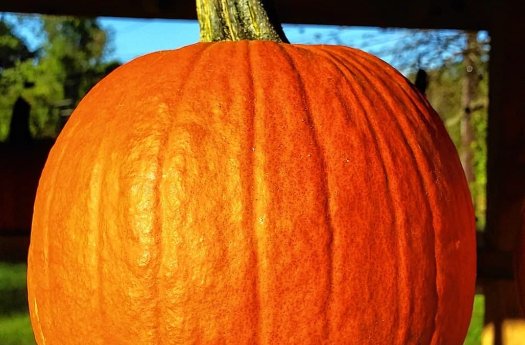 It's pumpkin season: Take your pick