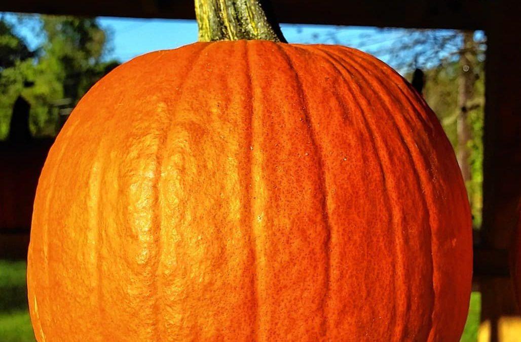 It's pumpkin season: Take your pick